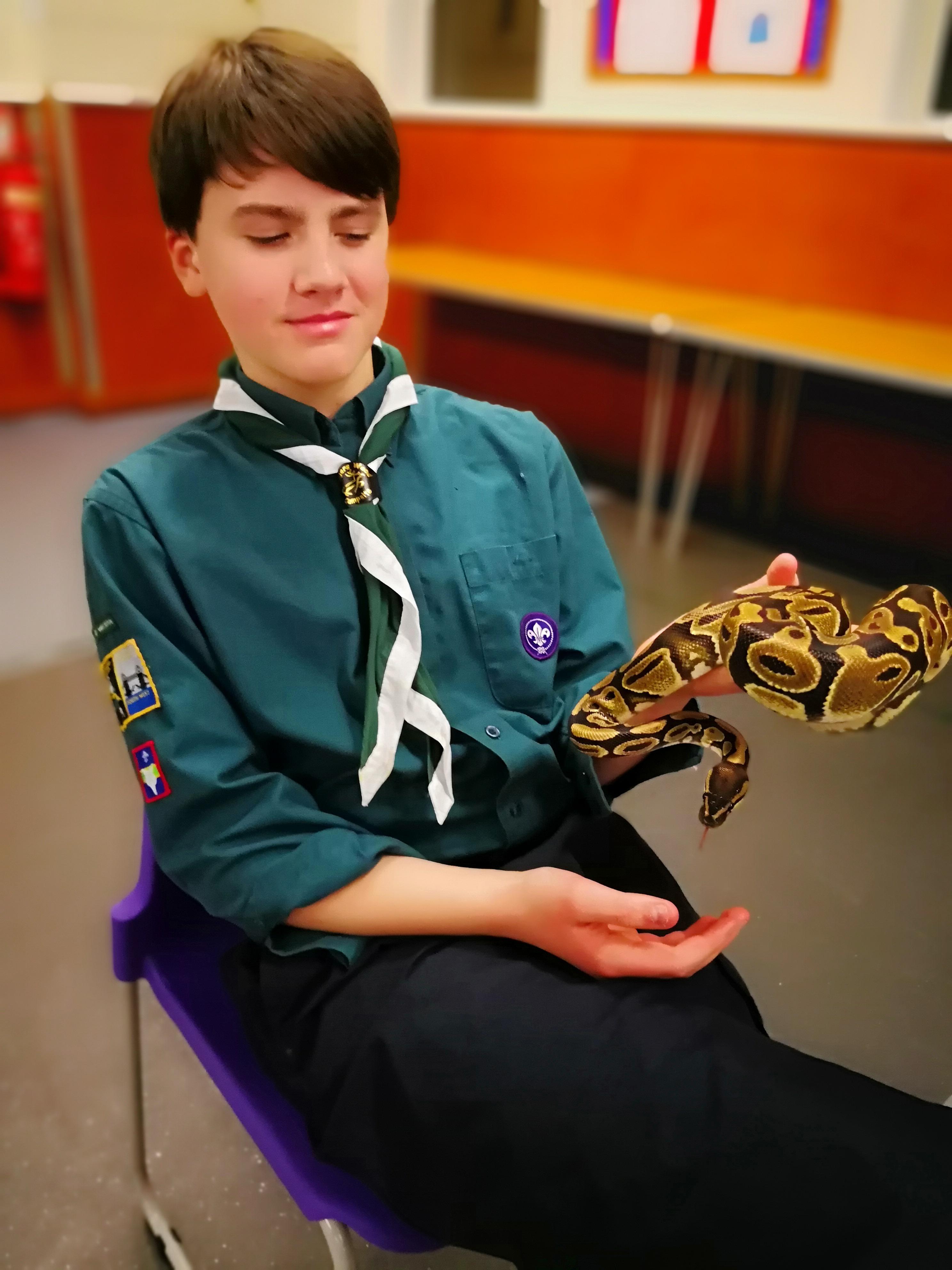 Animals meet Reptiles