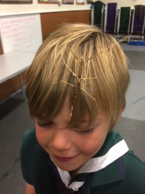 Nice Hair Accessory E1512223346714 2nd Whitton Scouts